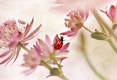 Ladybug Wall Art - Photograph - Ladybird And Pink Flowers by Ellen Van Deelen