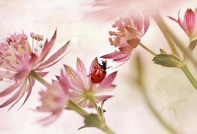 Ladybug Photograph - Ladybird And Pink Flowers by Ellen Van Deelen