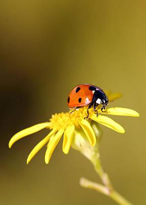 Photograph - Ladybird by Grant Glendinning