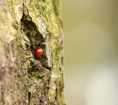 Photograph - Ladybird by Spikey Mouse Photography