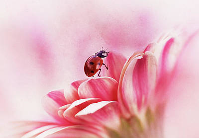 Macro Flower Photograph - Ladybird On Gerbera by Ellen Van Deelen