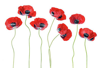 Red Flowers Photograph - Ladybird Poppies by Mandy Disher