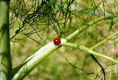 Photograph - Ladybird by Steve Ball