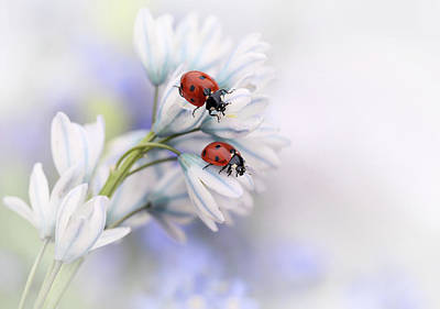 Bug Photograph - Ladybirds by Ellen Van Deelen