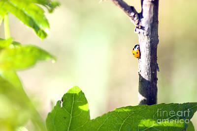 Ladybug 1.2777 Art Print by Stephen Parker