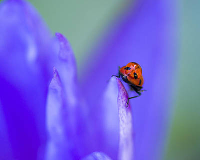 Photograph - Ladybug Adventure 8x10 by Priya Ghose