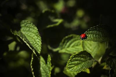 Ladybug Art Print by Bradley R Youngberg