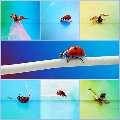 Ladybug Collage Art Print by Heike Hultsch