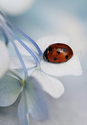 Holland Wall Art - Photograph - Ladybug by Ellen Van Deelen