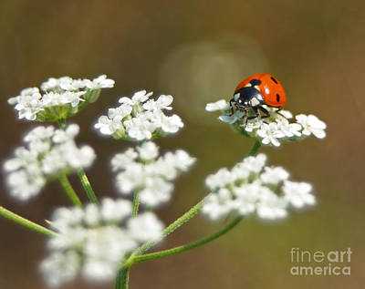 Photograph - Ladybug In White by David Cutts