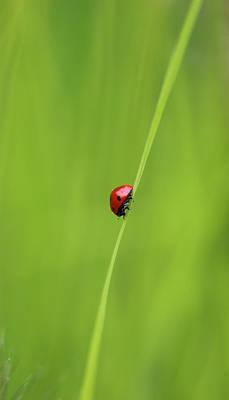 Photograph - Ladybug by Jackie Farnsworth