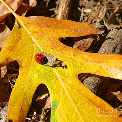 Photograph - Ladybug Leafing By Diana Sainz by Diana Raquel Sainz