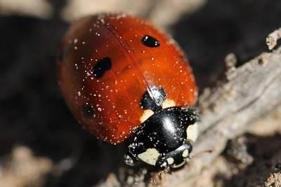 Ladybug Art Print by Lorri Crossno