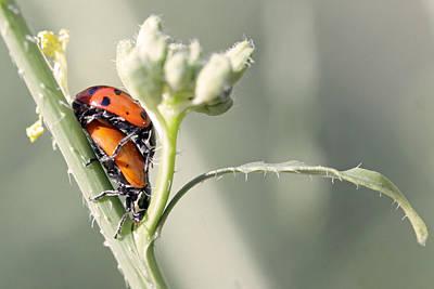 Ladybug Love Art Print by Shoal Hollingsworth