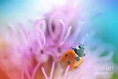 Photograph - Ladybug by Martin Capek