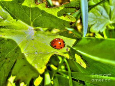 Photograph - Ladybug by Nina Ficur Feenan