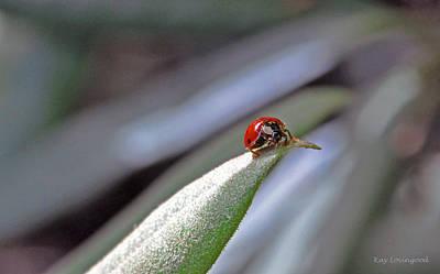 Photograph - Ladybug On A Leaf by Kay Lovingood