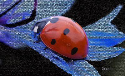 Photograph - Ladybug On Blue Cornflower - Featured In Comfortable Art Group by Ericamaxine Price