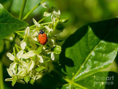 Ladybug On Flowers Art Print