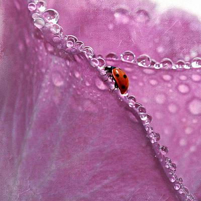 Ladybug Mixed Media - Ladybug On Rose by Heike Hultsch