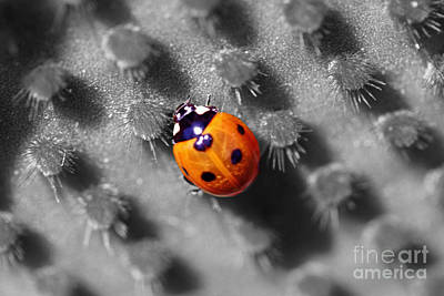 Photograph - Ladybug Sc by Morgan Wright