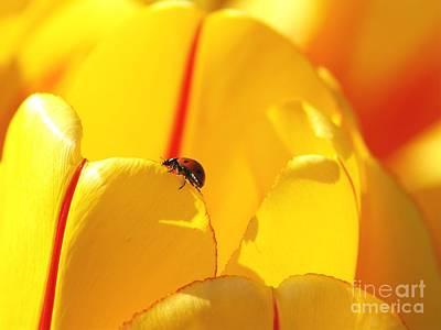 Ladybug - The Journey Art Print