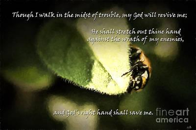 Photograph - Ladybug Wandering by Sandra Clark