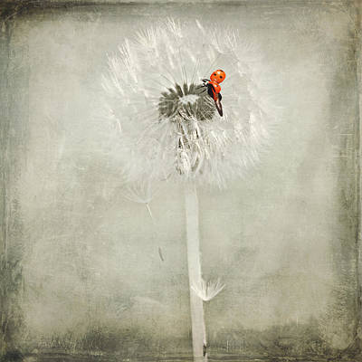 Umbrellas Mixed Media - Ladybug With Dandelion by Heike Hultsch