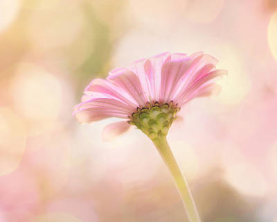 Soft Pink Photograph - Ladylike by Amy Tyler