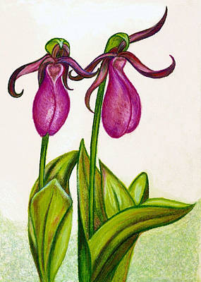 Drawing - Lady's Slipper by Jo Prevost