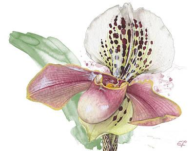 Ladys Slipper - Orchid 14 - Elena Yakubovich Art Print