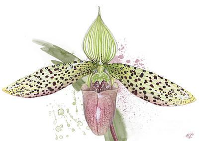 Lady Painting - Ladys Slipper - Orchid 16n - Elena Yakubovich by Elena Yakubovich