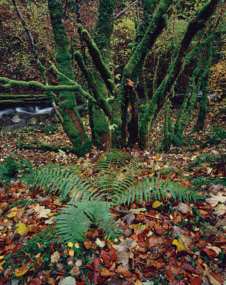 Photograph - Lael Forest Garden 2 by Tom Daniel