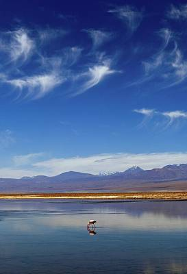 Pink Flamingo Nature Photograph - Lagoon And Volcanoes by Babak Tafreshi