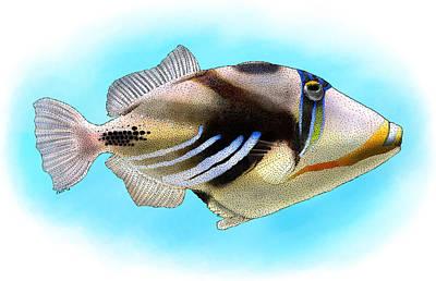 Triggerfish Photograph - Lagoon Triggerfish by Roger Hall