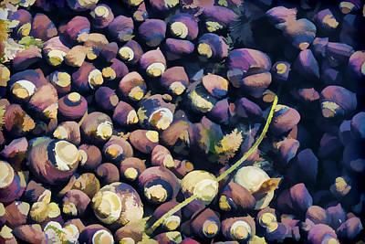 Laguna Beach Digital Art - Laguna Beach Tide Pool Pattern 1 by Scott Campbell
