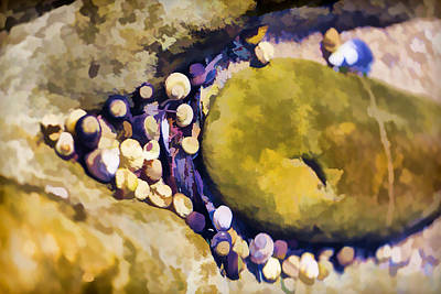 Laguna Beach Digital Art - Laguna Beach Tide Pool Pattern 5 by Scott Campbell