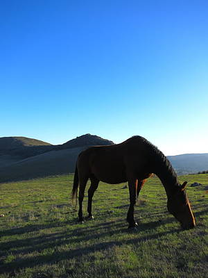 Photograph - Laguna Hills Grazing by Paul Foutz