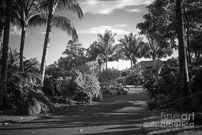 Photograph - Lahaina Palm Shadows by Sharon Mau