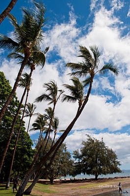 Photograph - Lahaina Palms by Paulette B Wright