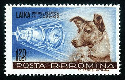 Manned Space Flight Photograph - Laika Space Dog Commemorative Stamp by Detlev Van Ravenswaay