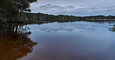 Photograph - Lake Ainsworth 2 by Odille Esmonde-Morgan