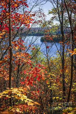 Algonquin Photograph - Lake And Fall Forest by Elena Elisseeva