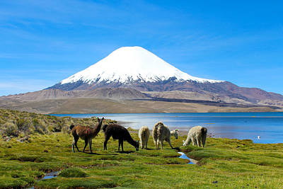Alpacas Photograph - Lake Chungara Chilean Andes by Kurt Van Wagner