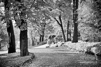 Photograph - Lake Como Path Monochrome by Kate McKenna