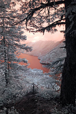Photograph - Lake Crescent Secret View by Rebecca Parker