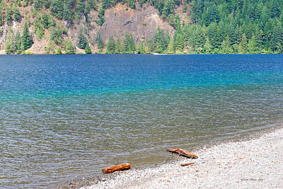 Photograph - Lake Crescent Shore by Connie Fox