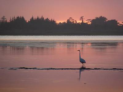 Photograph - Lake Earl Sunset  by Gracia  Molloy