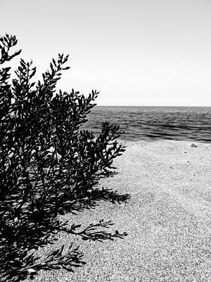 Photograph - Lake Erie Beach Succulent - Infrared by Shawna Rowe