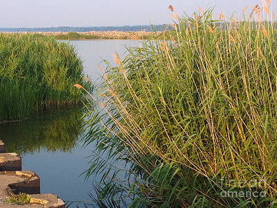 Photograph - Lake Erie Grasses by Anne Cameron Cutri